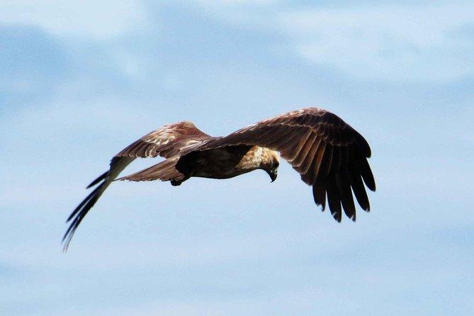 Muthurajawela Bird Watching Tour, Negombo, SRI LANKA