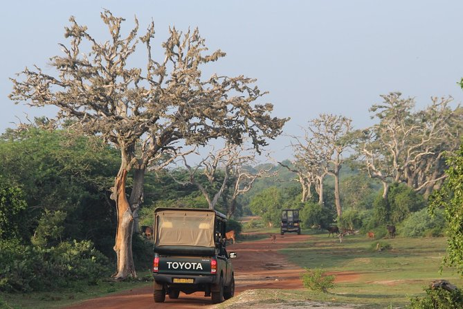 Full day game drive at Bundala National Park with Picnic Lunch, Galle, SRI LANKA