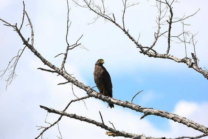 Half Day Safari at Bundala National Park, Galle, Sri Lanka