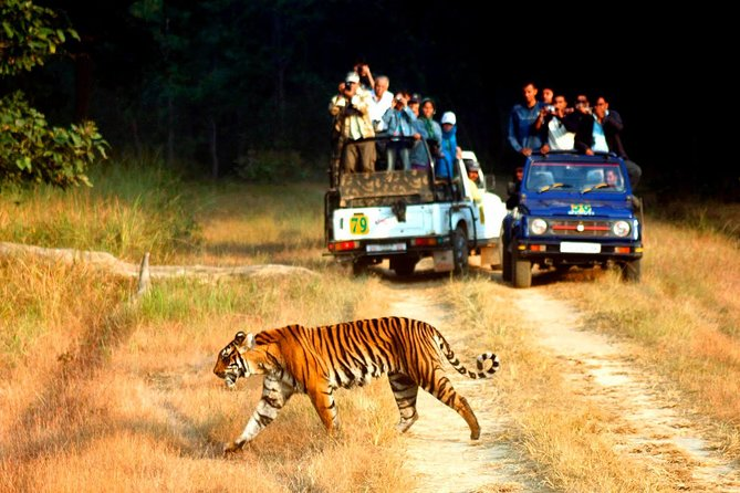 This nature lover Tour Jim Corbett gives you an opportunity to explore the famous historical sites of India with adventurous tiger safari at Jim Corbett Tiger Reserve. Jim Corbett complete 2 Night 3 Days packages from Delhi to Delhi, it's include accommodation, vehicles, adventure activities and sightseeing. This tour is perfect for those who seeks abundance of heritage sightseeing and natural wealth.