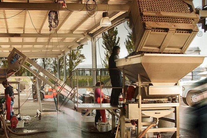 Renacer Winery Experience, Mendoza, ARGENTINA
