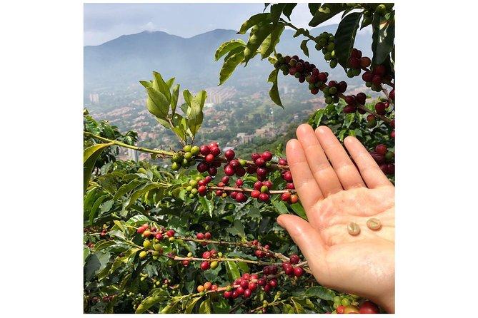 Recorrido sobre el café de Colombia: Recorrido de medio día | De la semilla a la taza, Medellin, COLOMBIA