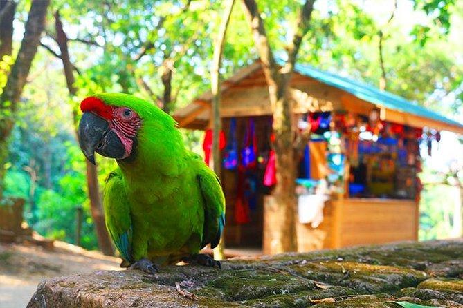 Mayan Eden Eco Wildlife Park, City Tour & Private Transfer, Roatan, HONDURAS