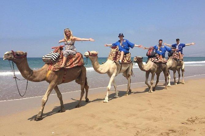 Ride a Camel at the Atlantic Ocean, Esauira, Morocco