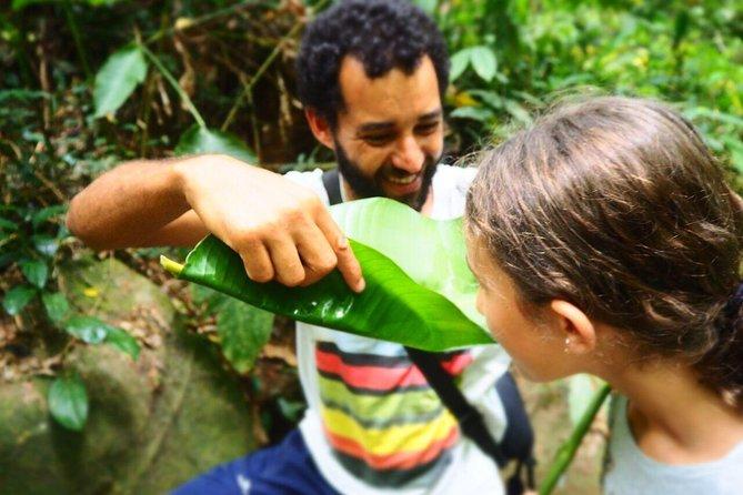MAIS FOTOS, Coleta na Floresta - Caminhada gastronômica selvagem