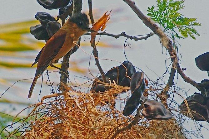 Observación de aves en La Mancha, Jalisco, Mexico