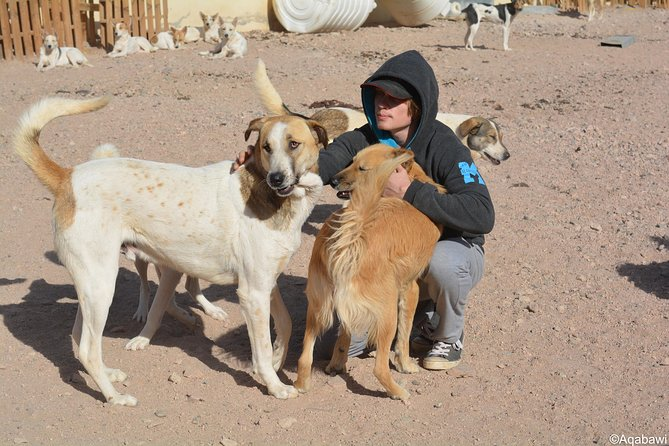 RSNAP is a nonprofit organization, established for the soul purpose of generating compassionate and conscientious conduct towards nature and animals and to provide the necessary services aimed to improve the local community's relation with its surrounding environment.<br><br>Aqaba dog shelter which needs volunteer to clean the local dogs caves in the mountains. <br>