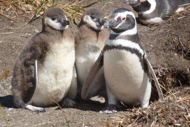 Tierra del Fuego Eco-Adventure: Beagle Channel Canoeing, Penguin Colony and Gable Island, Ushuaia, ARGENTINA