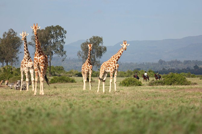 Tour Magical Kenya in 15 days and get to experience the bush and beach. Spot the Big 5 as you visit 3 major parks and encounter the local communities who still maintain their culture. From the bush safaris head to the coast for a chance to relax at the white sandy beaches.