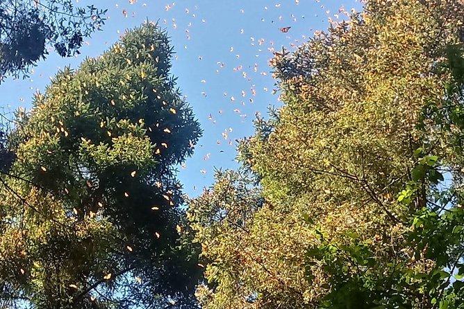 7 Day-Monarch Butterfly Ecofriendly Tour in Mexico, Ciudad de Mexico, Mexico