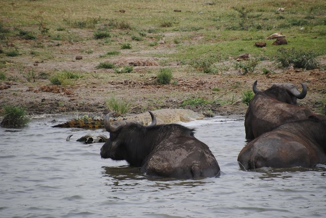 This Trip will Take you to the best of our wildlife National Park, enjoy the different views, and get exposed to different Uganda wildlife, look out for animals like Bufalos, Giraffe, different bird species, Elephants, the Murchison falls among others.