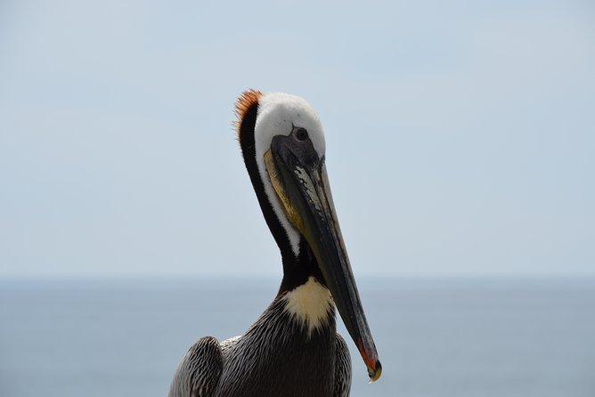 Birds Island, Mazatlan, MEXICO