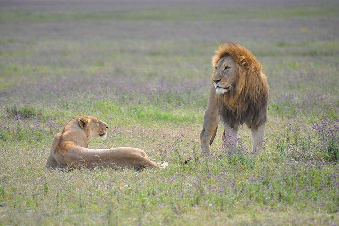Encuentros con animales en Tanzania: 6 días, Arusha, TANZANIA