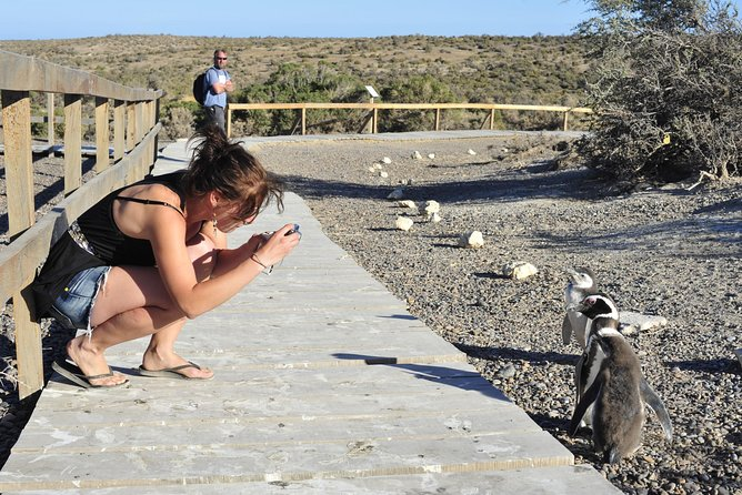 Punta Tombo Penguin Colony from Puerto Madryn with optional Toninas Watching, Puerto Madryn, ARGENTINA