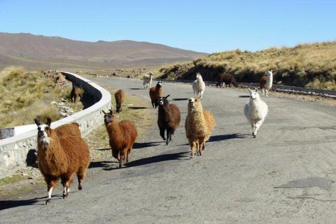 Recorrido de día completo por Tafí del Valle y las ruinas de Quilmes desde Tucumán, San Miguel de Tucuman, ARGENTINA