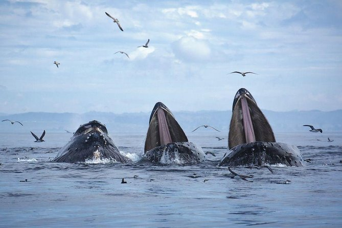 VIP Whale Watching Mecca Day Trip by Private Car: an armchair adventure tour, Quebec, CANADA