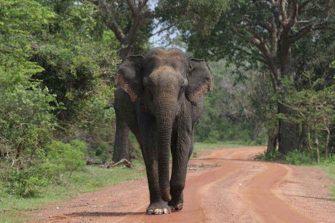 MAIS FOTOS, Evening Safari - Yala National Park with Janaka safari - 02.00 pm to 06.30 pm