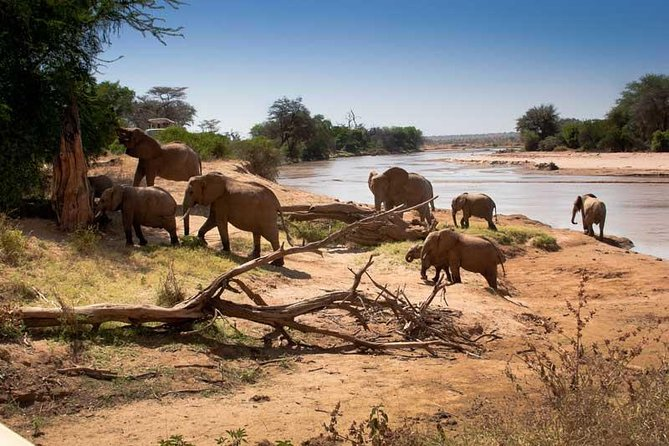 During the dry months the concentration of animals around the Tarangire river is almost as diverse and reliable as in the Ngorongoro Crater. However, the ecosystem here is balanced by a localised migration pattern that is followed by the majority of game that resides in and around the park.