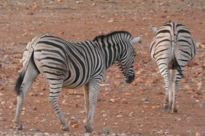 4 Day Etosha Safari Private Guided Tour Namibia, Swakopmund, NAMIBIA