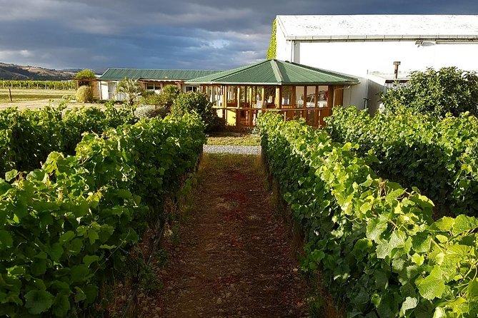 Halve Day Karl Johner Estate with your host Casper, Martinborough, NUEVA ZELANDIA