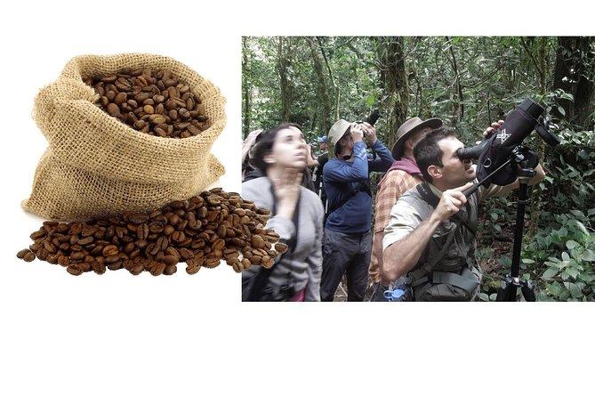 ¡Evite las multitudes! COMBINADO de recorrido sobre el café por la mañana, almuerzo y bosque nuboso por la tarde., Monteverde, COSTA RICA