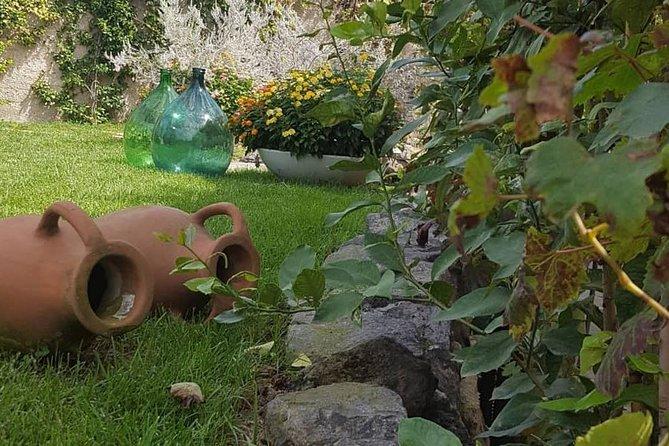 Pompei Archeological site and Wine tasting Experience, Amalfi, ITALIA
