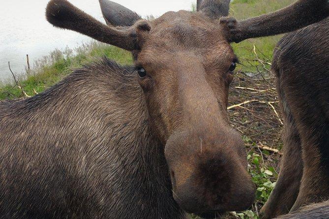 Wilderness, Wildlife & Glacier Experience from Anchorage, Anchorage, AL, ESTADOS UNIDOS