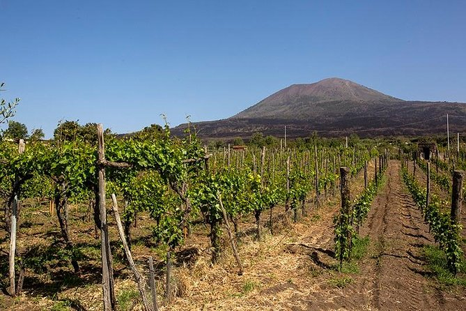 Organic Wine Tasting & Lunch on Vesuvius with Transfer from Amalfi Coast, Amalfi, ITALY