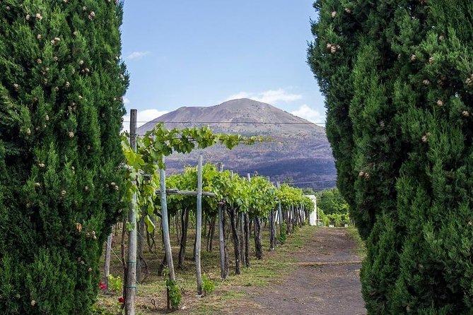 Organic Wine Tasting & Lunch on Vesuvius with Transfer from Amalfi Coast, Amalfi, ITALY