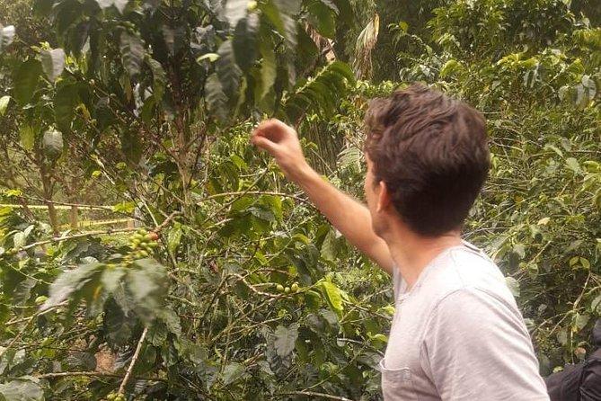 Excursión de un día a Jardín: Visita turística y recorrido del café de Colombia desde Medellín, ,