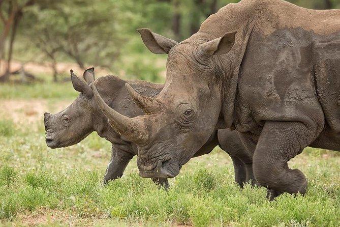 4-Day Or Game Lodge Safari, Johannesburgo, África do Sul
