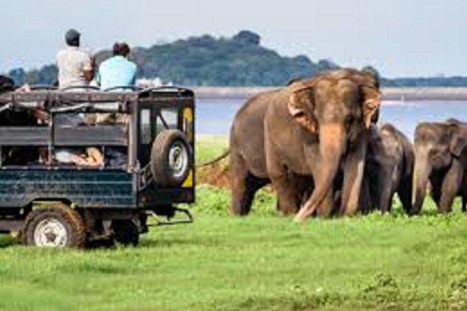 2 Days Yala & Galle, Parque Nacional Yala, SRI LANKA