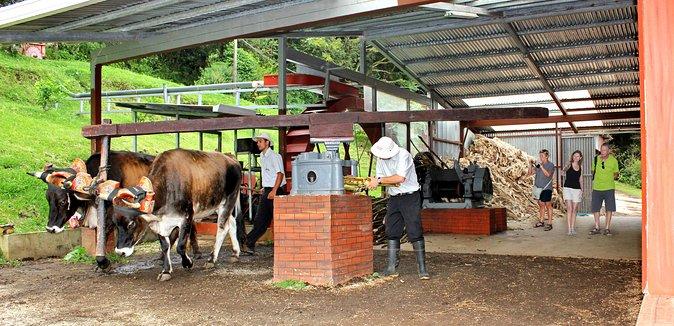 3 IN 1 El Trapiche Tour Coffee,Chocolate and Sugar Cane, Monteverde, COSTA RICA