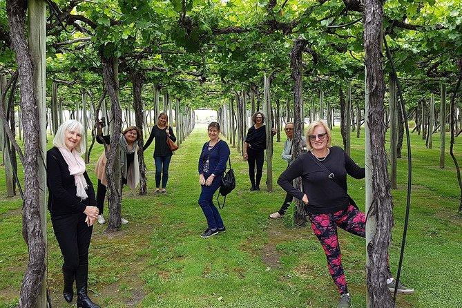 Marlborough Wine Region Tour from Blenheim 10am, ,
