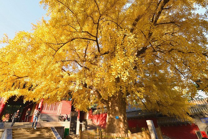 Private Tour to Zhongyue Temple, Shaolin Temple and Zen Music Ceremony from Luoyang, Luoyang, CHINA
