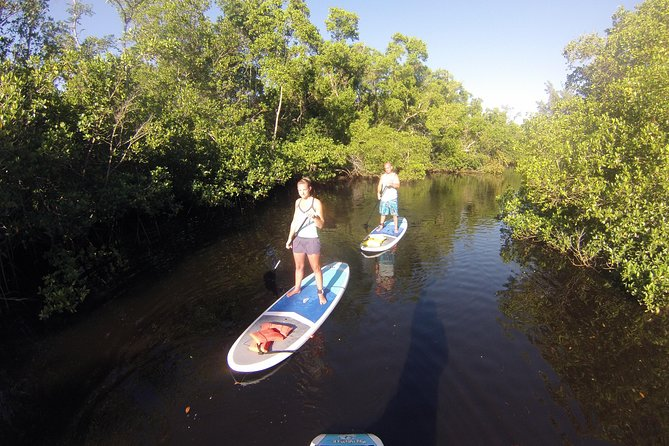 Naples FL, PaddleBoard or Kayak Adventure mangrove forest Tour , For two people, Naples, FL, ESTADOS UNIDOS