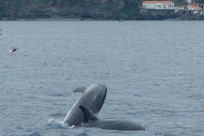 Observação De Golfinhos, Baleias, Tartarugas E Pássaros, ,