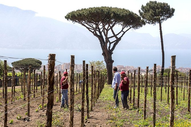 Pompeii Ruins & Wine Tasting with Lunch on Vesuvius with Private Transfer, Amalfi, ITALIA