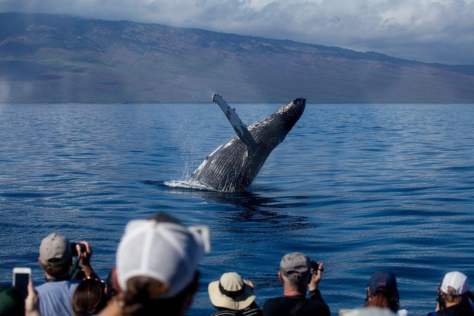 Experience Maui's top-rated whale watch with the experts departing from the historic Lahaina Harbor. These informative and fun two-hour whale watches are led by a team of certified Marine Naturalists who explain and interpret the social behavior of humpback whales. Listen to whale songs through underwater hydrophones and watch a variety of whale behaviors between mothers, calves or aggressive males competing for females. Every trip is different and you never know what you'll experience. Moreover, whale sightings are guaranteed on all whale watches or you go again for free.