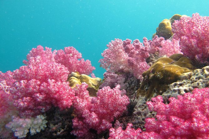 Snorkeling Day Tour to the Maldives of Thailand by Longtail Boat from Koh Lipe, Ko Lipe, TAILANDIA