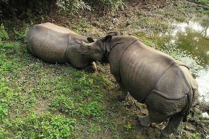 3-Day Chitwan Jungle Safari Tour from Kathmandu, Katmandu, NEPAL