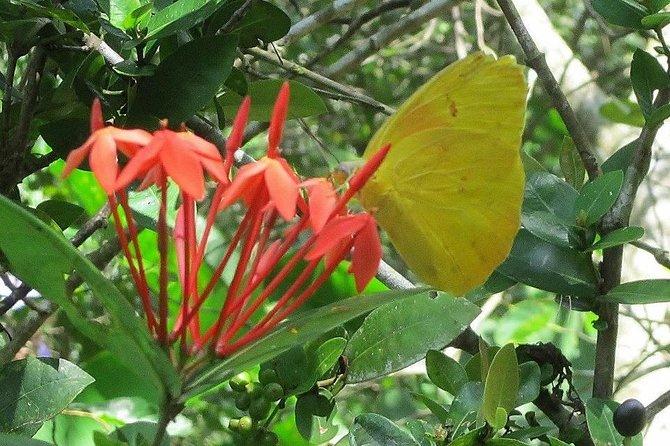 Botanical Garden Tour with Waterfall, Huatulco, MÉXICO