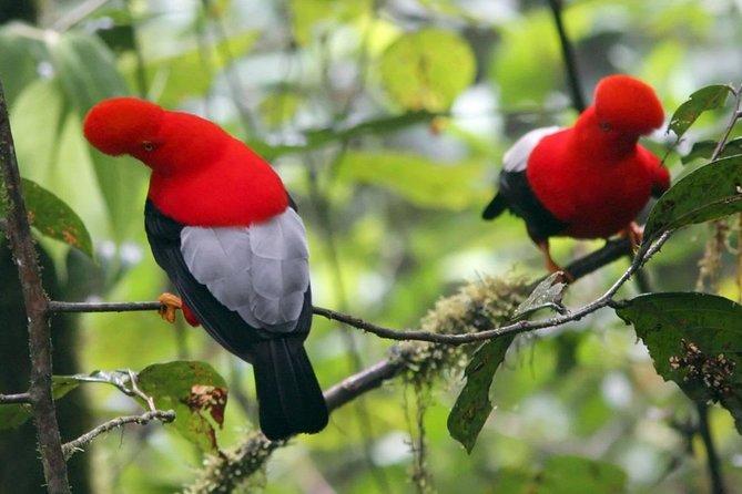 Recorrido privado de 2 días al bosque nublado de Mindo desde Quito, Quito, ECUADOR