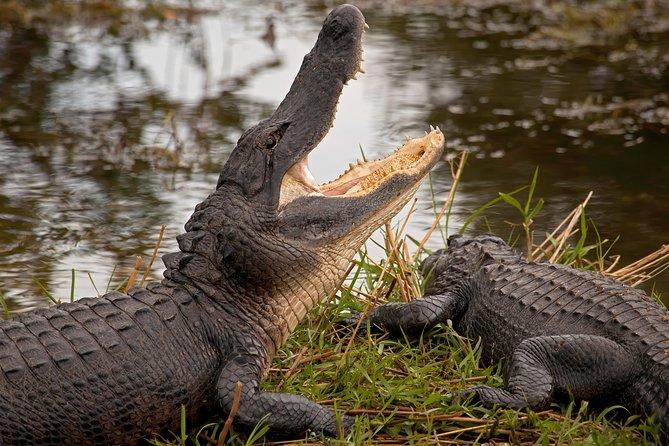 Miami Everglades Safari Park Airboat Adventure with Transport, Miami, FL, ESTADOS UNIDOS