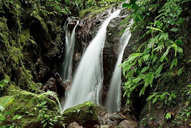 Excursión a los puentes colgantes y las cataratas de Rainmaker Park, ,