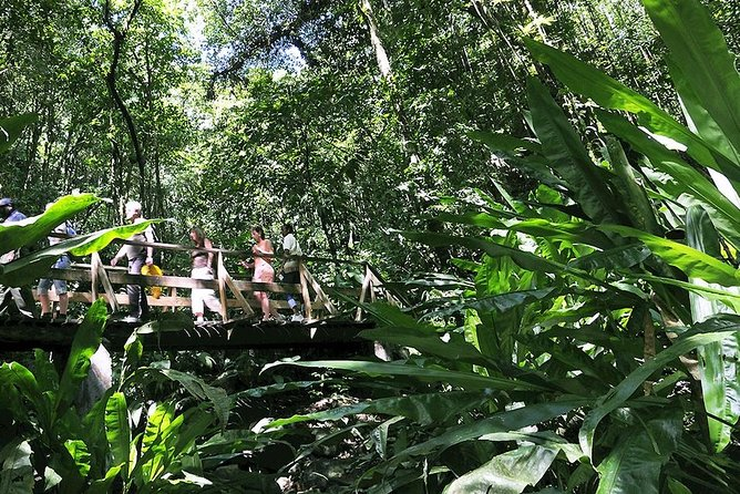The Vermont Nature Trail takes you through lush rain forest with an amazing variety of tropical flora,beautiful scenery and a chance to see the famous St. Vincent Parrot in its natural habitat.