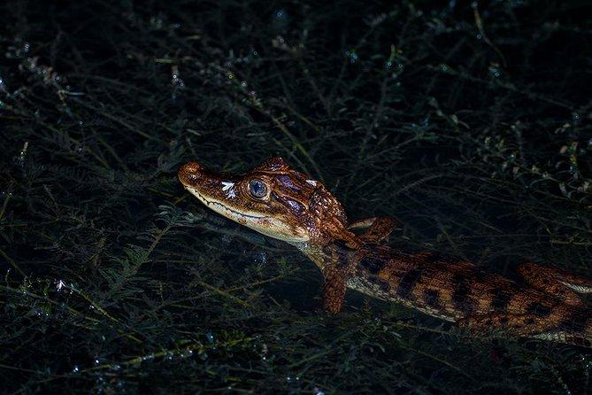 Safari nocturno en barco, Gamboa, PANAMA