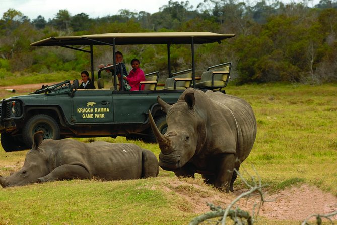 A 2 hour guided game drive in a game viewer. The qualified and experienced guide will take you on a journey through the Kragga Kamma Game Park educating you about all the animals, birds and plants that are in the park.