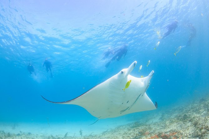 Our Marine Eco Safariis an incredible way to experience the Ningaloo Reef!Coral Bay's residentManta Rays areregularlyencountered all year round.
