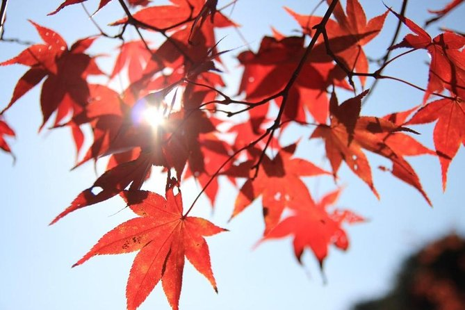 The Beauty of the Korea Fall foliage Discover 9days 8nights, Incheon, COREA DEL SUR